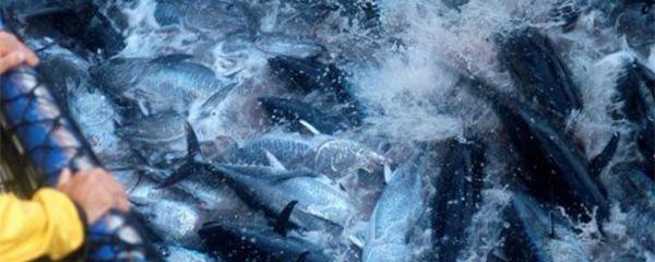 Pêche : 169,2 millions de tonnes en 2015