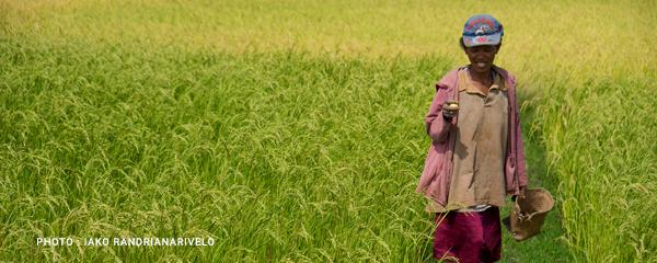 Investissements agricoles : 100 millions USD en cinq ans